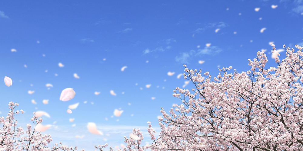 青空を舞う桜吹雪